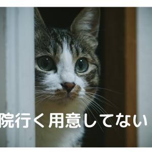 【失敗しない】いい動物病院の特徴5つ