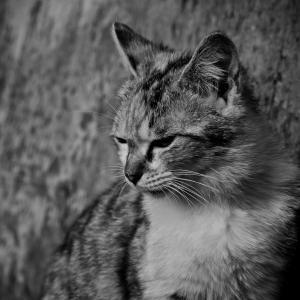 猫がごはんを食べない!3つの理由