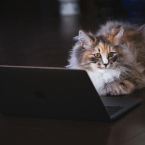 【猫の不思議】猫は人を召使いだと思ってないよ・・・たぶん