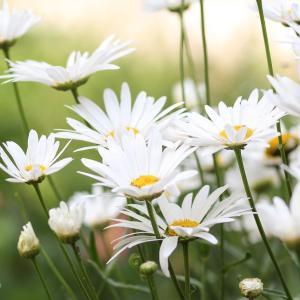 You made my day、笑顔の花を咲かせ続けよう!