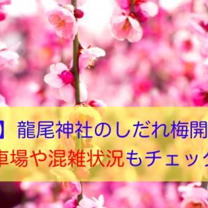 【静岡】龍尾神社のしだれ梅開花状況!駐車場や混雑状況もチェック!