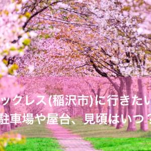 桜ネックレス(稲沢市)に行きたいっ!駐車場や屋台、見頃はいつ?