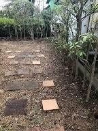 12/31 スッキリ!生垣