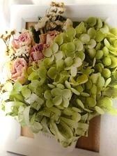 紫陽花(あじさい)の花言葉! 花を愛でた後は、紫陽花1本でおしゃれなドライフラワーに