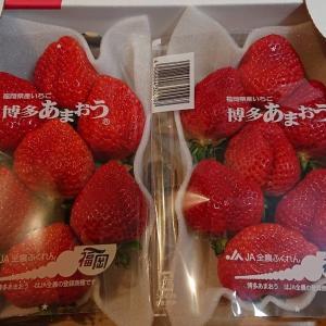 福岡のいちごは美味かった!