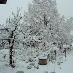 永田の雪 小さい旅路 爽やかなに      撮影:令和2年3月29日 AM7:00
