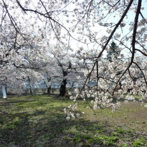 南会津町永田: 大橋清隆という病  2021 73齢