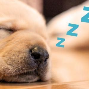 睡眠とダイエットの深い関係。良質な睡眠をとるには?