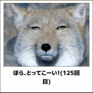【写真でボケて】動物の画像集♪かわいいけど面白い