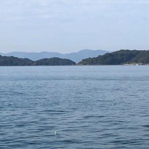 カゴ釣り(2020/12/11中潮↓)イラ40cm