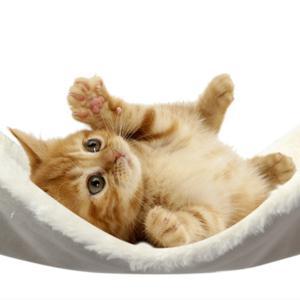 MUSUBI 猫用ふんわりリバーシブルハンモック