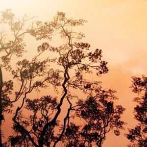 想像を超えていたカリフォルニアの山火事