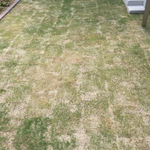 芝生の成長具合