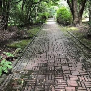梅雨の日の散歩(片耳日記)