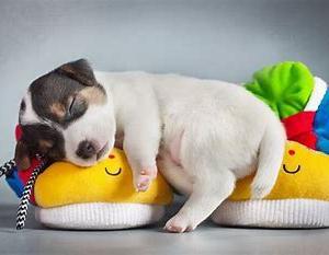 睡眠不足は風邪ひきの原因