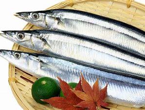 美味しい魚は旬の天然♡