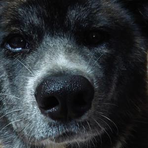 愛犬との【出会い】NO2・保護犬?ペットショップ?
