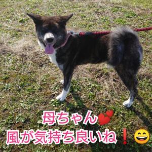 愛犬との【散歩】風が強くて寒い!まーちゃんは?