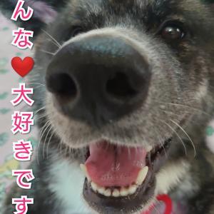 愛犬の【病】怖い病気😱初めて知った病名は・・・そして出来るだけの予防とは?