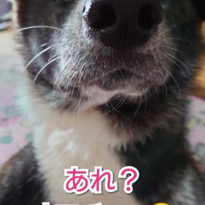 愛犬の【興奮】我が家のしつけ♪(お散歩編🐕)