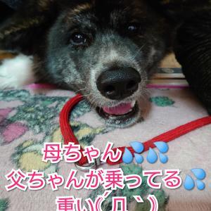 愛犬の【気持ち】喜び爆発!