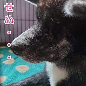 愛犬の【気持ち】解せぬ・・・