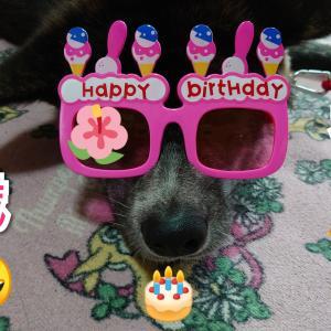 愛犬の【お祝い】本日1歳になりました