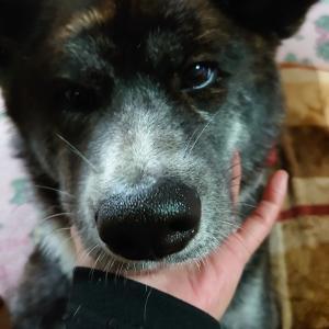 愛犬の【日常】お散歩行けないんだから!!