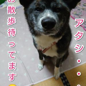 愛犬の【食】これならどうだ!