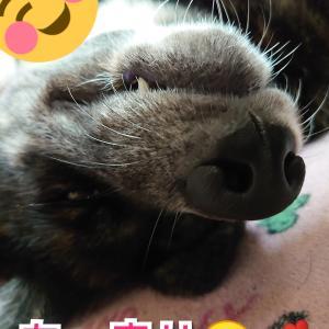 愛犬への【愛】父ちゃんとの時間は至福&母ちゃんの愛は?