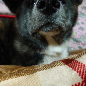 愛犬の【優】母ちゃんが心配