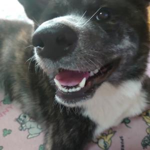 愛犬の【笑】素晴らしき笑顔!