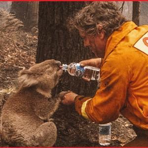 4億8000もの動物が死亡!?今もなお拡大するオーストラリアの悲惨な火災状況