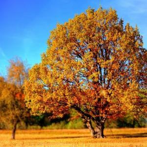 天高く馬肥ゆる秋、燥金の秋は肺にご注意