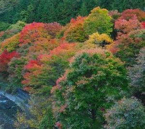 紅葉を求めて その6 完 「もみじ湖」