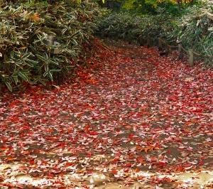 都会の紅葉 その3 六義園 ②