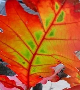 きれいな葉っぱ