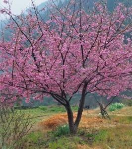「みなみの桜」 その1 道中①