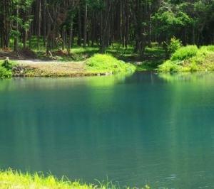 気ままな撮影の旅 その36 青い池