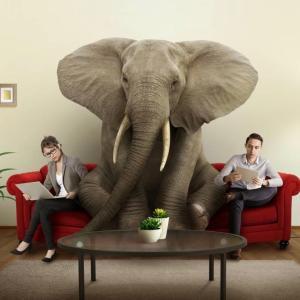 【ある日突然外国で...】家の中、会社の中の象はいる?