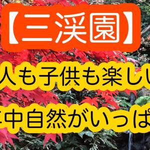 【三渓園】大人も子供も楽しめる!紅葉だけじゃない!見どころ満載!
