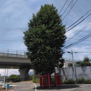 大山街道Walking・柏尾通り(2)目指すは戸田の向こう側