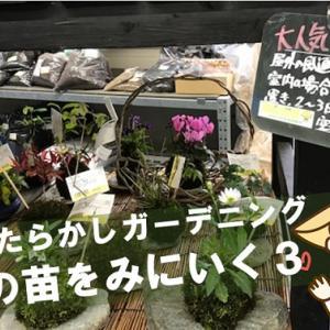 【花の苗@松山市】おひさま市へ花の苗をみに行ってきました!