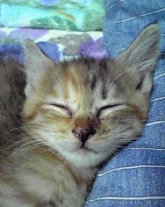✿ 子猫 ✿