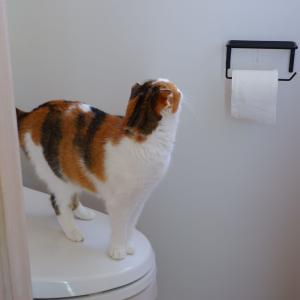 トイレットペーパーの交換を楽にしよう