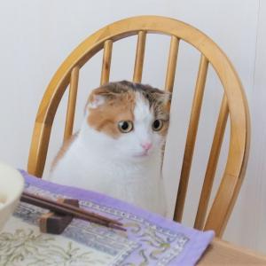 シンプルライフにおける猫のもの③