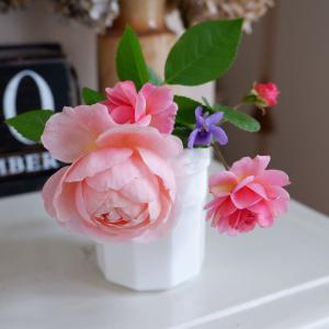 バラの香りの人