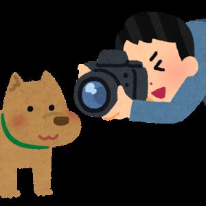 愛犬の様子を見る方法