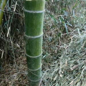 竹が自然に枯れる切り方