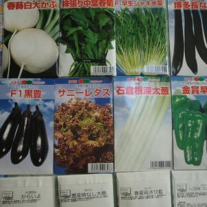 野菜の種をまくと楽しみがついてくる
